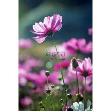 fotobehang veldbloemen roze van ESTA home