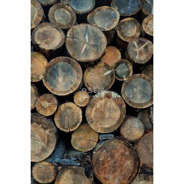 fotobehang boomstammen bruin van ESTA home