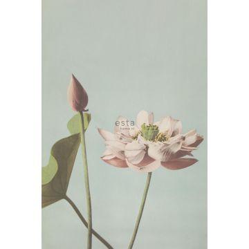 fotobehang lotusbloem oudroze van ESTA home