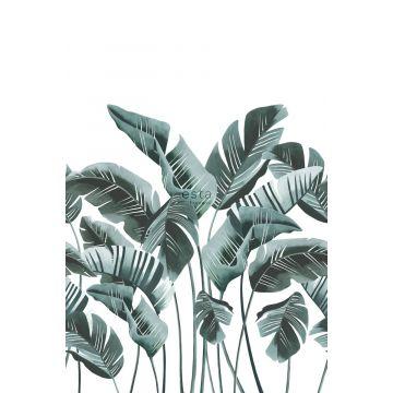 fotobehang grote bananenbladeren blauwgroen van ESTA home
