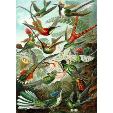 fotobehang vogels tropisch junglegroen van ESTA home