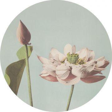 zelfklevende behangcirkel lotusbloem zacht roze en vergrijsd blauw van ESTA home