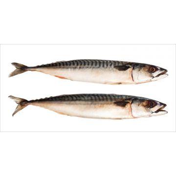 ESTAhome muursticker vissen grijs